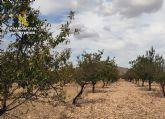La Guardia Civil recupera más de cinco toneladas de almendra sustraídas de una finca agrícola de Abanilla