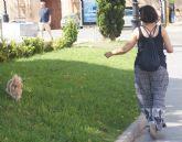 Recuerdan que no recoger los excrementos de mascotas de la vía pública puede entrañar sanciones de hasta 750 euros