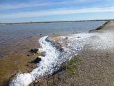 Medio Ambiente aclara que la espuma blanca de las charcas de las Salinas de San Pedro del Pinatar se debe a un proceso natural