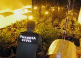 La Guardia Civil desmantela una plantación de marihuana en una vivienda en Totana ocupada ilegalmente por una joven pareja