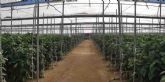 Presente y Futuro del Sector Hortofrutícola de Almería