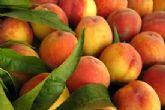 ASAJA Murcia reclama una interprofesional para la fruta de hueso española