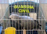 La Guardia Civil recupera un loro desaparecido del domicilio de sus propietarios en Las Torres de Cotillas