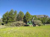 La Región de Murcia certifica sus primeros créditos de carbono procedentes de gestión forestal