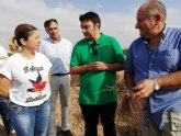 La trufa del desierto crece con éxito en una finca experimental del Campo de Cartagena