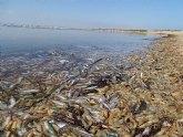 Muerte masiva de la fauna del Mar Menor