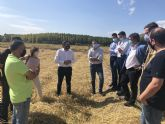 La cosecha de la DO Arroz Calasparra crecerá un 20 por ciento esta campaña, en la que esperan superar los 3 millones de kilos