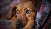 Posicionamiento de la Cátedra Animales y Sociedad respecto al borrador de la Ley de Protección y Derechos de los animales