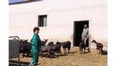 UPA propone ayudar a los ganaderos de caprino a reducir su producción láctea nacional un 10%