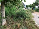 La CHS realiza el desbroce y la poda en la mota del río entre Orihuela y Beniel