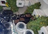 La Guardia Civil desmantela una plantación de marihuana en la pedanía pachequera de Roldán