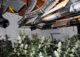 La Guardia Civil desmantela una plantación con más de un centenar de plantas de marihuana en Cehegín