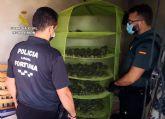 La Guardia Civil desmantela en Fortuna un grupo dedicado al cultivo ilícito de marihuana