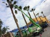 Realizan labores de poda y mantenimiento de la población de palmeras en la vía pública, y parques y jardines