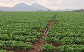 La aportación económica real de la agricultura intensiva del Campo de Cartagena supone un 0,6% del PIB