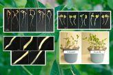 Desarrollan un sistema inteligente que controla el crecimiento vegetal 'in vitro'