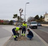El Ayuntamiento pone en marcha un Plan de Arbolado Urbano para mejorar la imagen del municipio