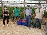 Sulfato cálcico, una alternativa ecológica y económica para la nutrición cálcica de los cultivos