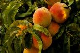 Procedimiento para solicitar trabajadores en empleo agrario seg�n las medidas del RD-Ley 13/2020