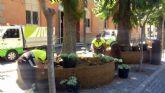El Ayuntamiento reforma más de una veintena de 'anillos' colocados bajo las casuarinas de la Plaza del Romea