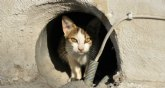 Se renueva el programa CES para el mantenimiento de colonias de gatos ferales