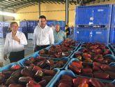 Antonio Luengo visita las instalaciones del mercado agrícola de San Javier