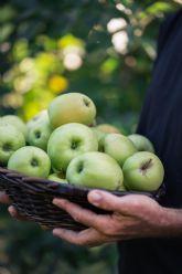 Lidl incrementa un 17% sus compras de manzanas y peras espanolas en solo dos anos