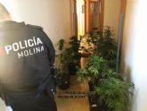 La Policía Local de Molina de Segura detiene a una persona por cultivo de marihuana tras quejas vecinales por el olor
