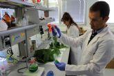 Investigadores del IMIDA demuestran un efecto antiinflamatorio y antioxidante en las hojas de morera