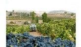 La ruina de los viticultores acecha tras la pandemia