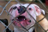El Ayuntamiento ha tramitado en el último año y medio un total de 16 expedientes de licencia para la tenencia de animales potencialmente peligrosos