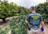 La Guardia Civil desmantela un clan familiar que cultivaba marihuana en una finca de Fortuna