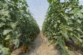'CuTE' desmonta cinco fake news sobre el cultivo en invernadero