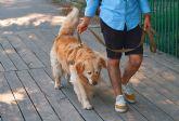Las Torres de Cotillas combatirá el abandono de mascotas