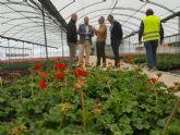 El vivero municipal del Mayayo está trabajando en el cultivo de 50.000 geranios que van a decorar los Jardines de Primavera