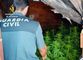 La Guardia Civil desmantela en Murcia un clan familiar dedicado al cultivo ilícito de marihuana