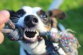 Tramitan en lo que va de año 4 expedientes de licencia para la tenencia de animales potencialmente peligrosos