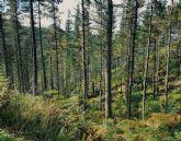 Central Forestal, la división de silvicultura de la compañía situada en Iurreta (Vizcaya), dispone de la certificación PEFCT, que garantiza que los bosques se gestionan de forma responsable