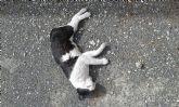 Ola de envenenamientos en las Colonias Felinas Protegidas de Dolores de Pacheco