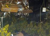 La Guardia Civil desmantela en Pliego una plantación indoor de marihuana