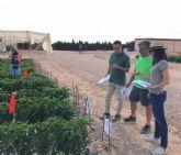 Presentan en Murcia los primeros resultados de su ensayo en pimiento