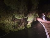 Se encuentra cortada la carretera de la Santa por caída de árboles