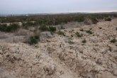 ACUDE y el Ayuntamiento de Alhama siembran cereales en la Alcanara