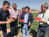 Presentan la campaña de promoción y consumo de sandía 'Si tienes sed… Cómeme' para fomentar el consumo de la variedad del Valle del Guadalentín