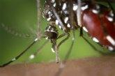 El Ayuntamiento participa en el Sistema Regional de Vigilancia Entomológica del Mosquito Tigre