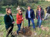 El entorno de la batería del Monte de las Cenizas es repoblado con jara de Cartagena, especie en peligro de extinción