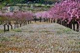 Floración arranca este fin de semana con un mes por delante repleto de actividades
