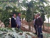 El IMIDA colabora con productores de Mazarrón en la mejora de cultivos tropicales para adaptarlos a las características de la Región