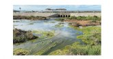 Declaración del acuífero del Campo de Cartagena como contaminado