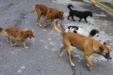 Contratan el servicio de recogida de animales abandonados o vagabundos y la gestión de animales muertos